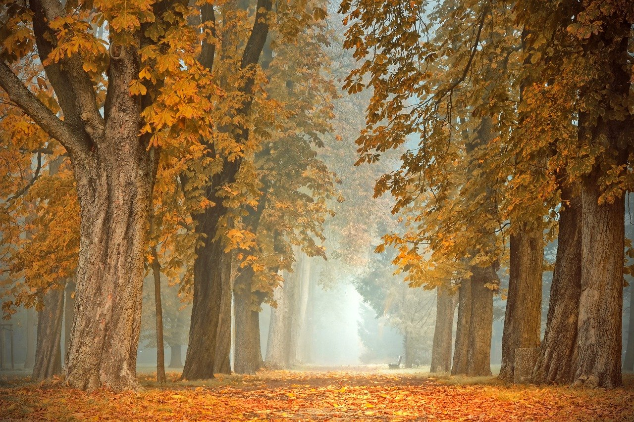 castagni toscana autunno